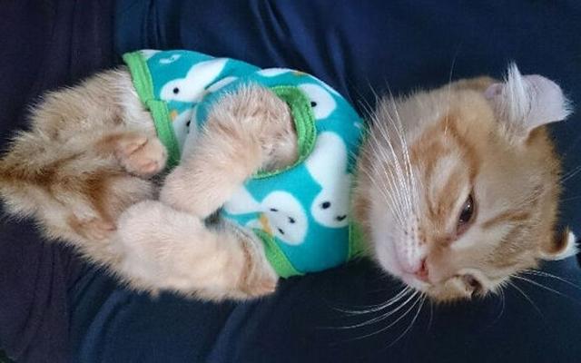 壁纸 动物 猫 猫咪 小猫 桌面 640_400