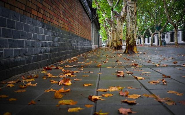 选一条文艺的街道之最,感受上海