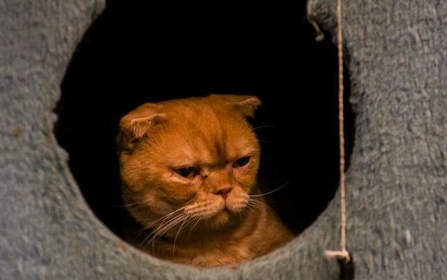 有猫在,休息日下午就这样挥霍