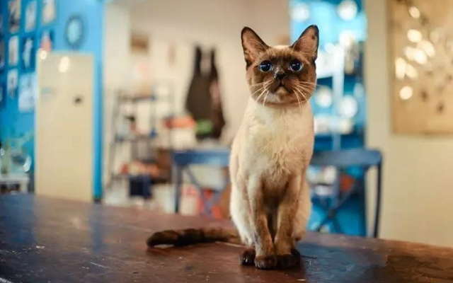 张小猫的咖啡馆
