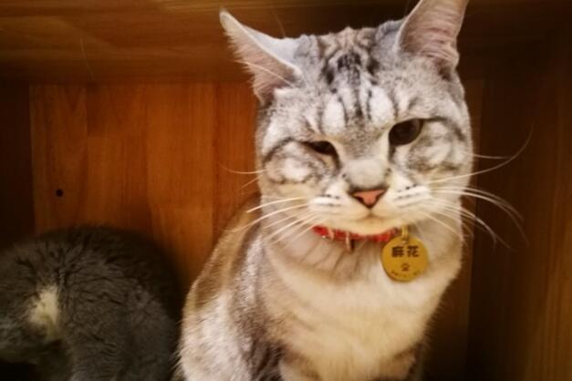 有猫是一件多么富裕的事情呐