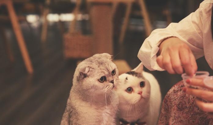 猫小主猫咖啡&cat cafe